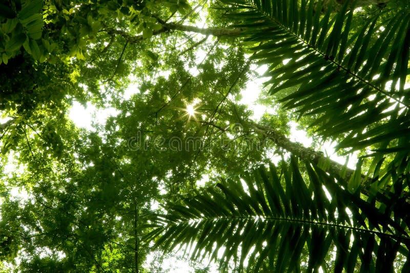 Angle faible de forêt humide