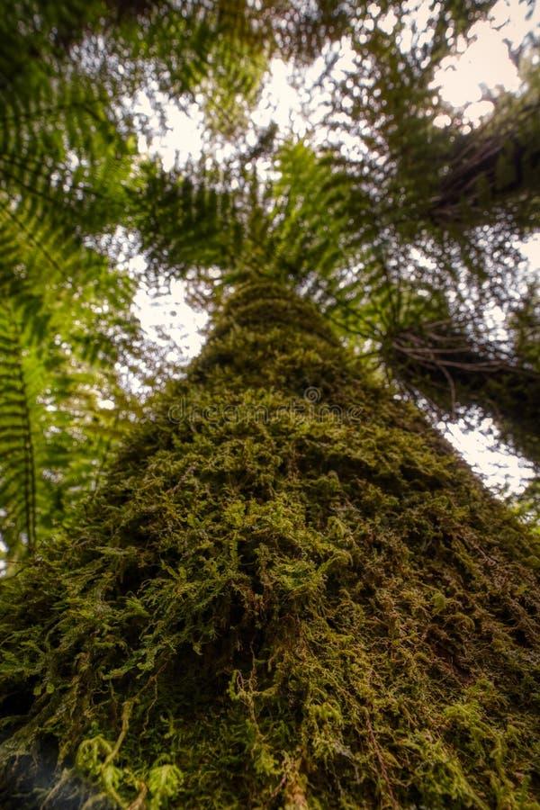 Angle faible de tronc d'arbre avec de la mousse photographie stock libre de droits