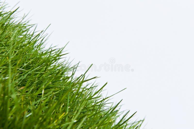 Angle neuf sur l'herbe de yard de pelouse photo libre de droits