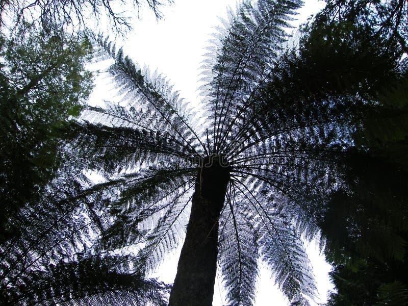 Angle peu commun de palmier images libres de droits