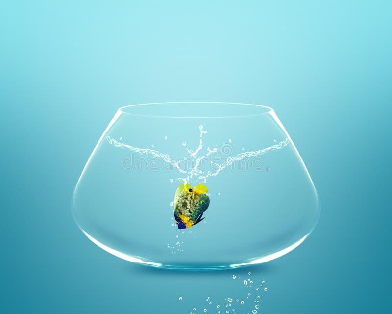 Anglefish que salta à bacia grande imagem de stock royalty free