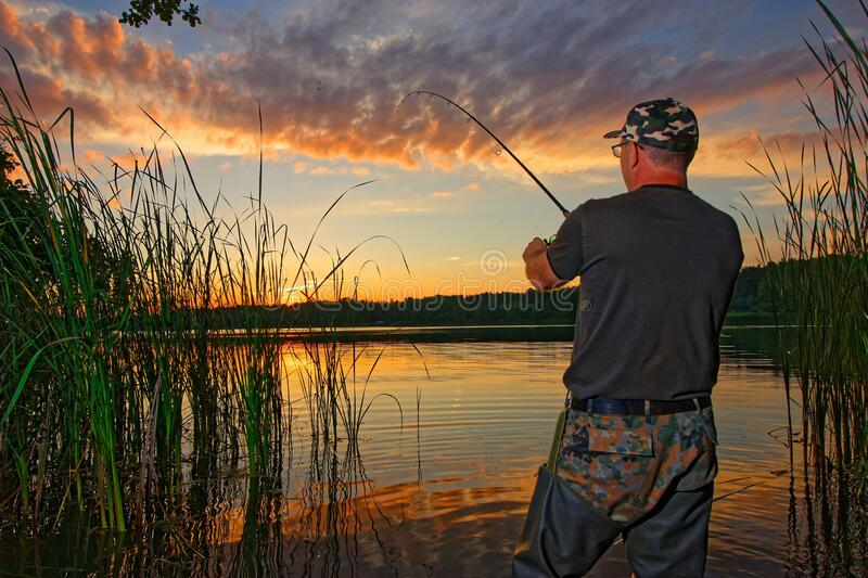 Angler. Catching fish in the lake during sunset royalty free stock photo