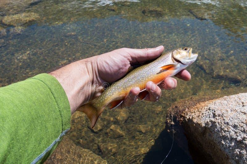 Angler con trucha de brook atrapada en el lago Yosemite imágenes de archivo libres de regalías