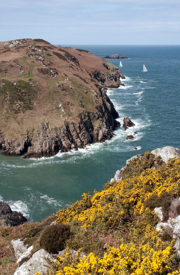 Download Anglesey coastal path stock image. Image of island, gorse - 14155231