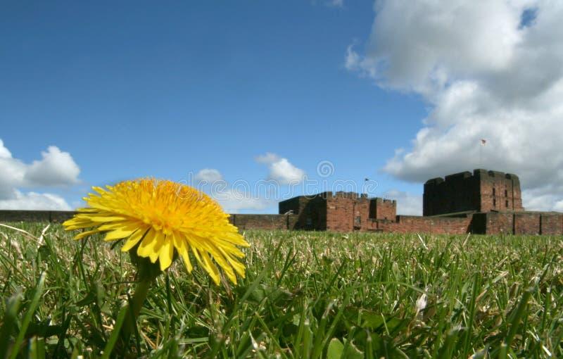 Download Angolo Basso Del Castello Di Carlisle Fotografia Stock - Immagine di castello, dandelion: 3131406