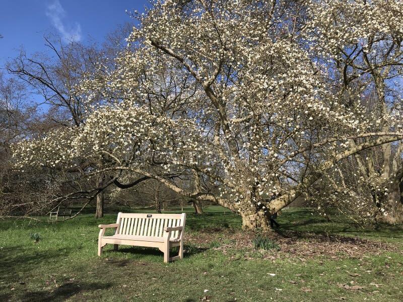 Angolo dei giardini di Kew immagini stock