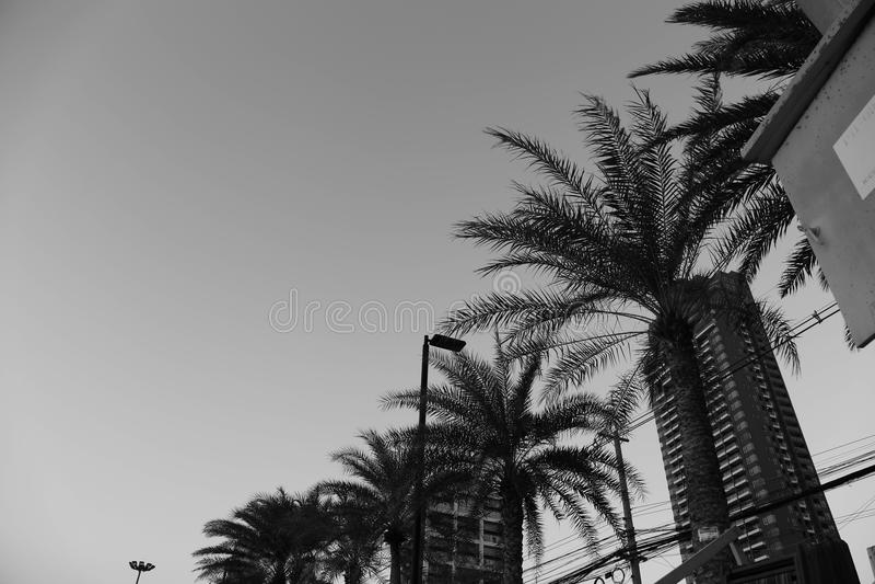 Angolo differente della spiaggia fotografie stock libere da diritti