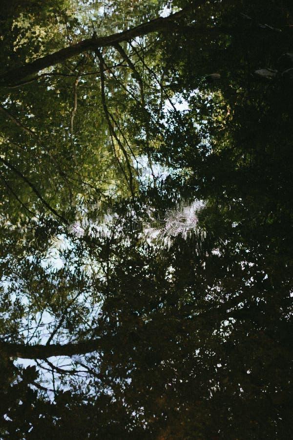 Angolo verticale ridotto di alberi nella città di Wolverhampton, Regno Unito fotografia stock