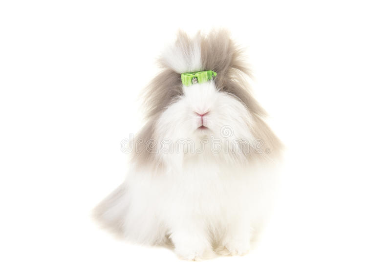 Angora bunny seen from the front wearing a green bow isolated on a white background stock photography