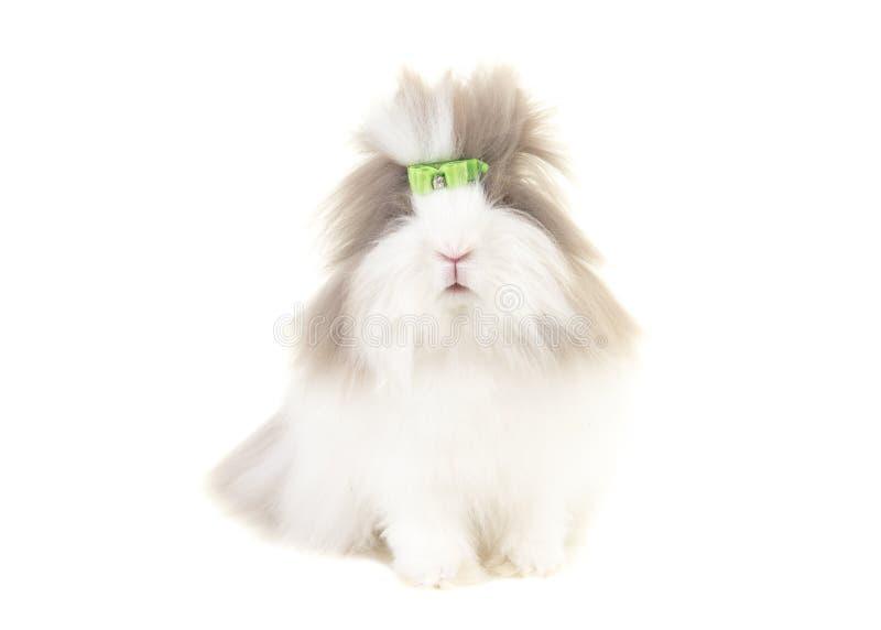 Angora die konijntje van de voorzijde wordt gezien die een groene die boog dragen op een witte achtergrond wordt geïsoleerd stock fotografie
