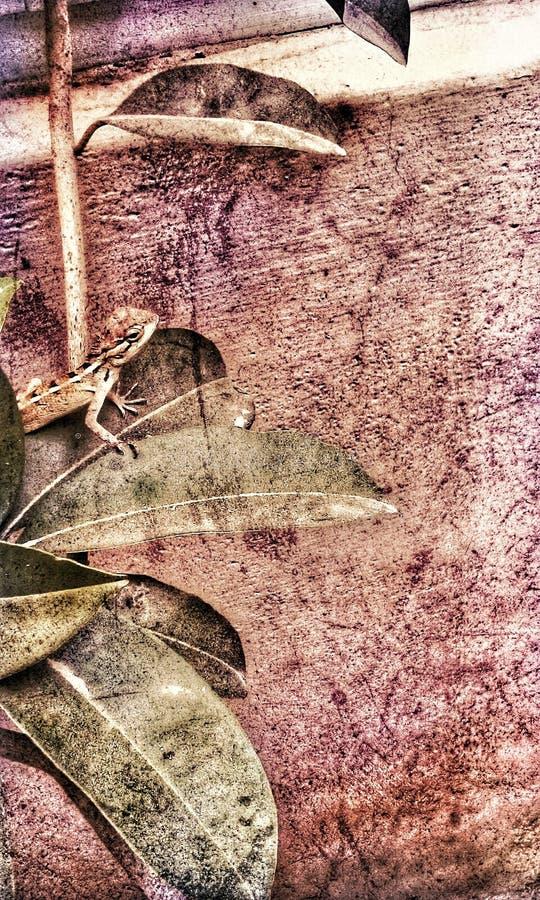 angoras wildlife стоковое фото rf