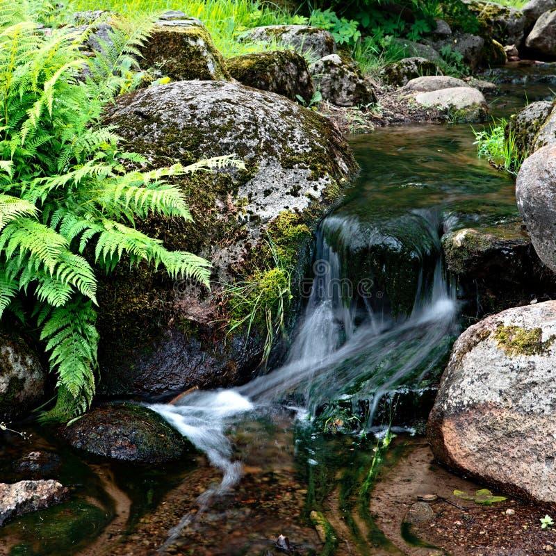 Download Angra foto de stock. Imagem de floresta, respingo, musgo - 26520592
