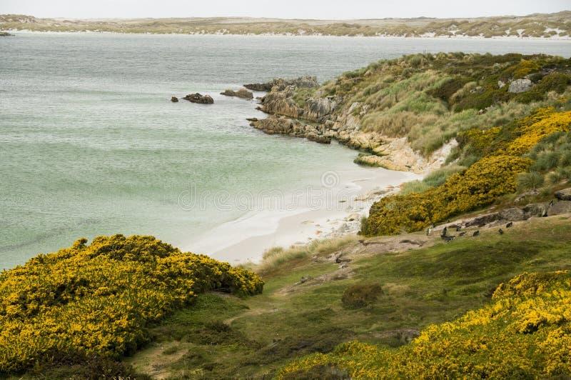 Angra aciganada - Ilhas Falkland imagem de stock royalty free