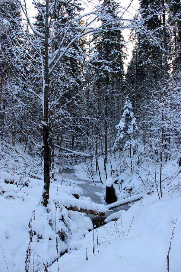 Angra congelada na floresta do inverno imagens de stock