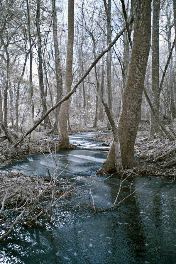 Angra congelada nas madeiras foto de stock royalty free