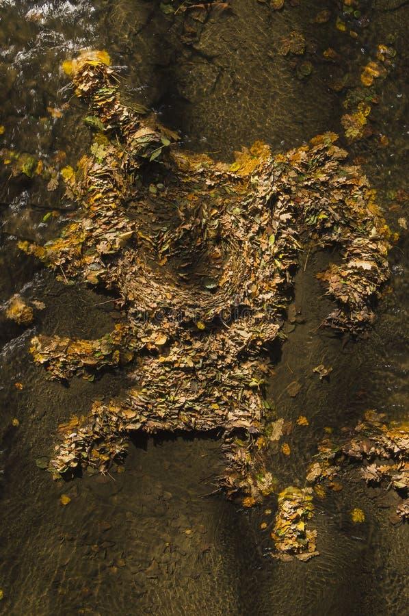 Angra da água das folhas imagens de stock royalty free