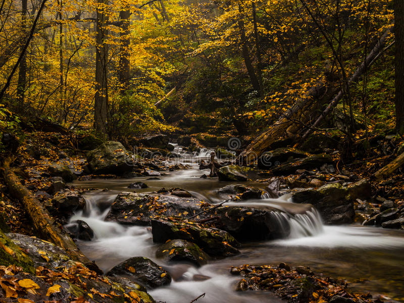 Angra da floresta do outono imagem de stock