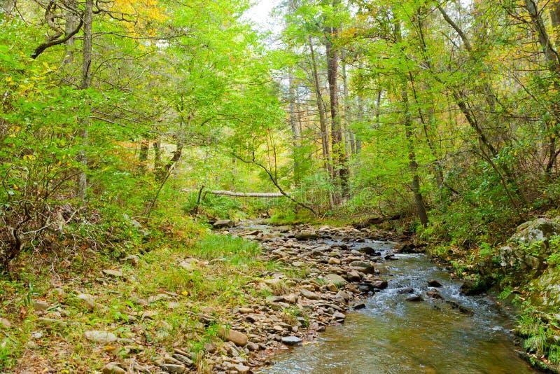Angra da floresta no outono. fotografia de stock