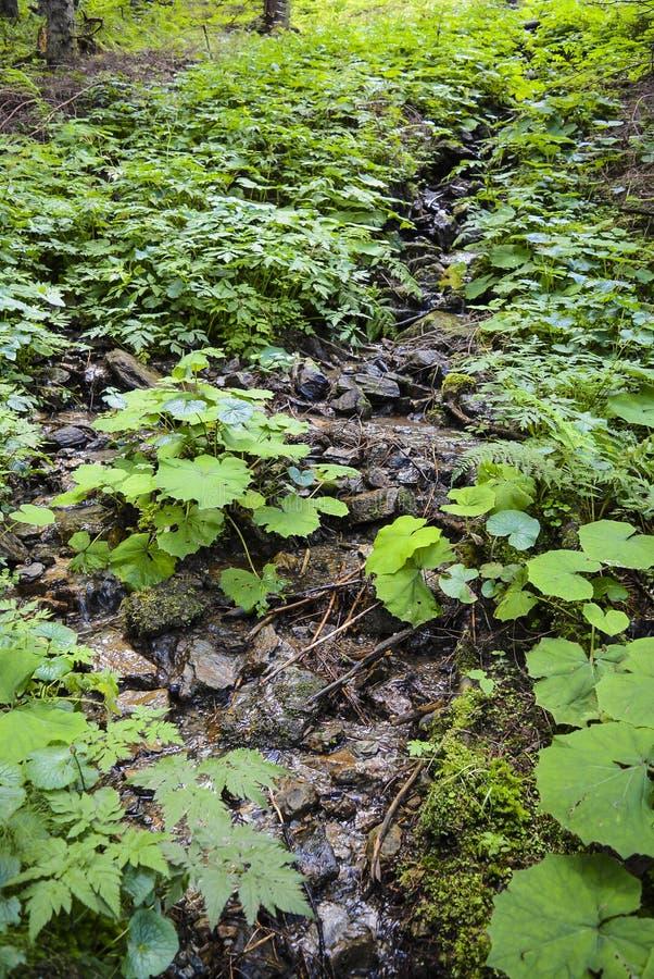 Angra da floresta, rio com as plantas no fundo fotografia de stock
