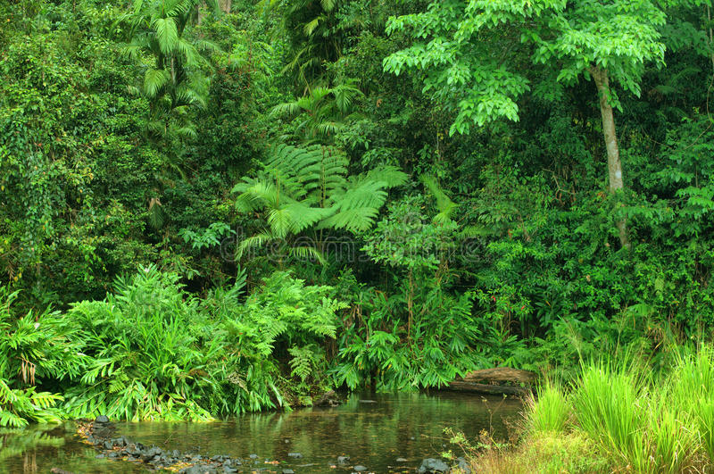 Angra da selva imagens de stock