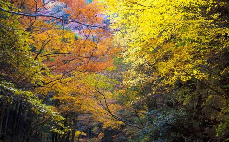 Angra de Akame em Nabari, Mie, Japão foto de stock