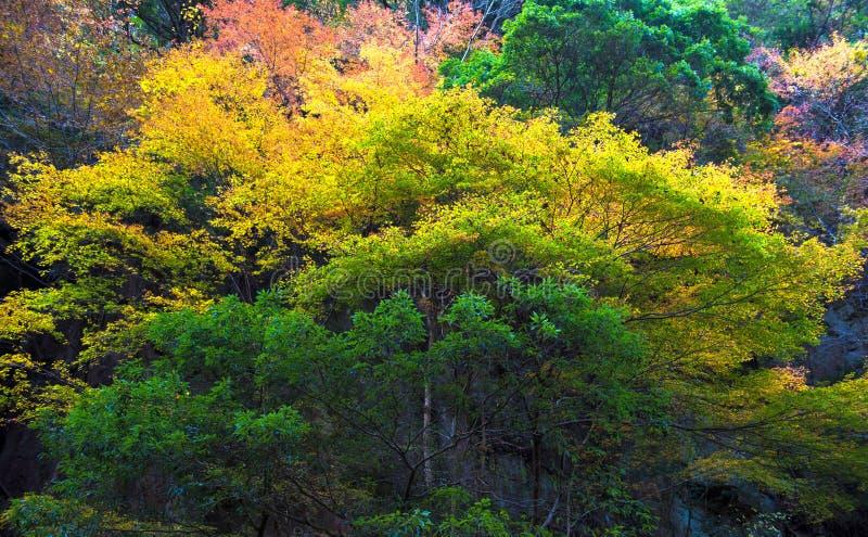 Angra de Akame em Nabari, Mie, Japão fotografia de stock