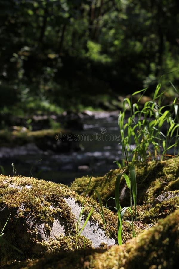 Angra 42 de Alemanha fotografia de stock royalty free