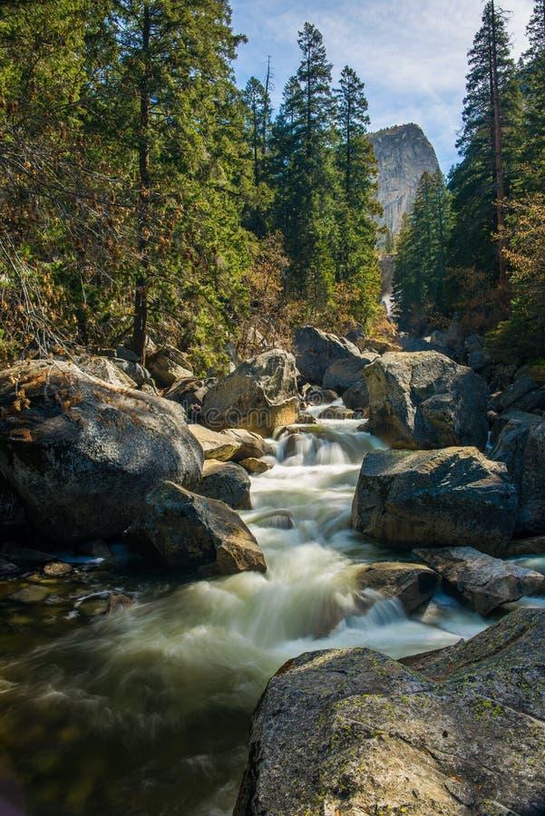 Angra de fluxo em uma floresta imagem de stock royalty free