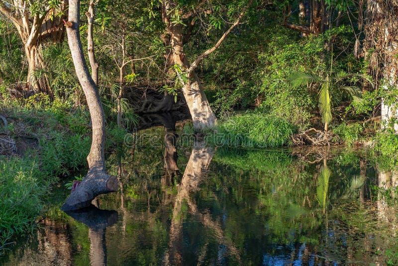 Angra em Bushland com reflexões imóveis da água fotos de stock