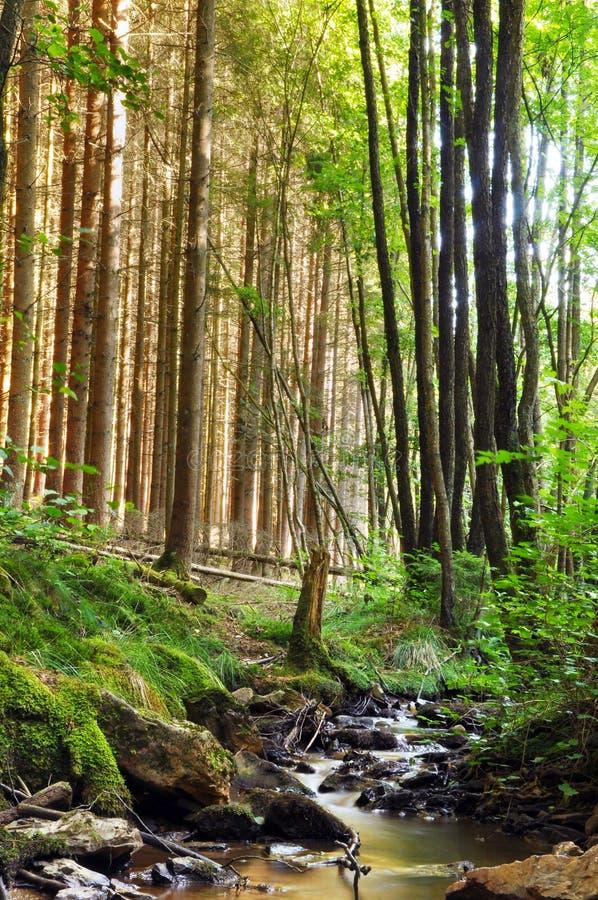 Angra em uma floresta foto de stock royalty free