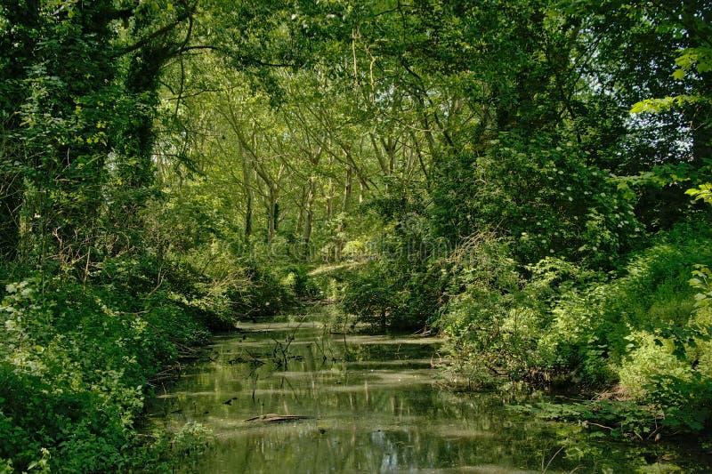 Angra em uma floresta verde luxúria da mola fotos de stock