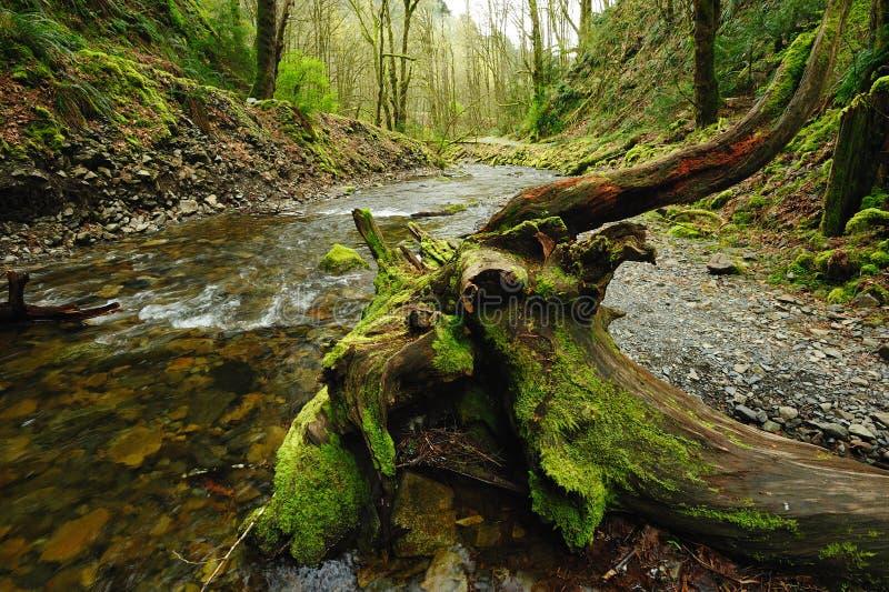 Angra na floresta imagens de stock royalty free