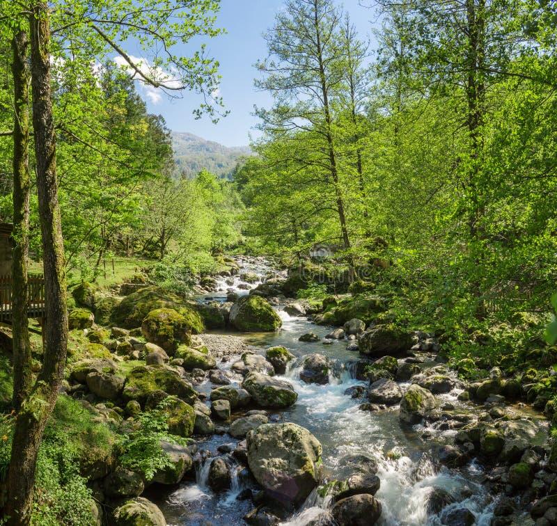 Angra na floresta foto de stock royalty free