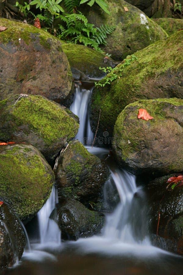 Angra na selva de Havaí fotografia de stock royalty free