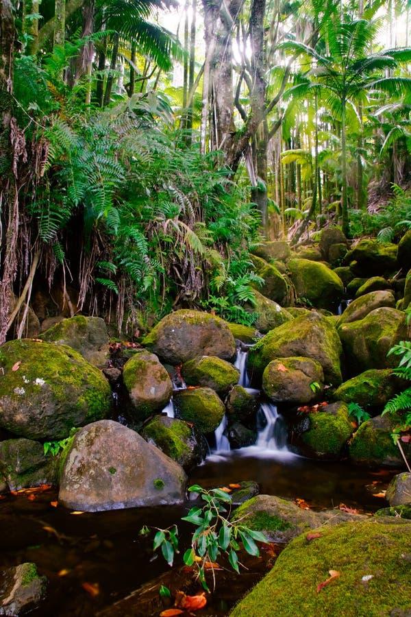 Angra na selva de Havaí imagem de stock