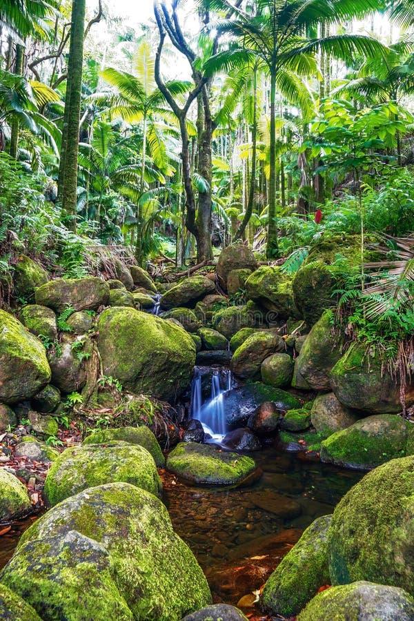 Angra pequena na selva da ilha grande. Havaí. fotografia de stock