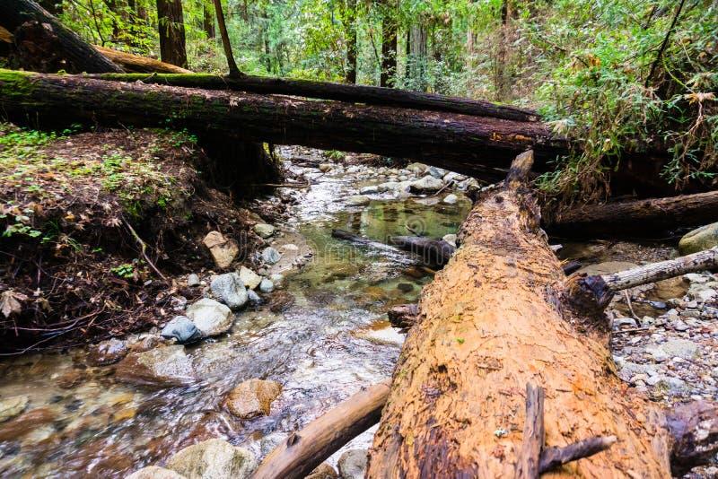 Angra que corre através das florestas de montanhas de Santa Cruz, Felton, área de San Francisco Bay, Califórnia fotos de stock
