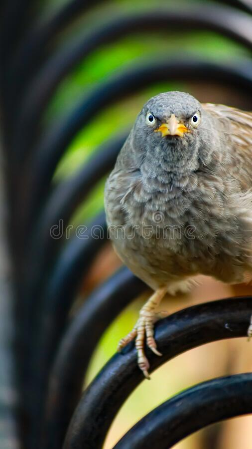 The angry bird royalty free stock photos