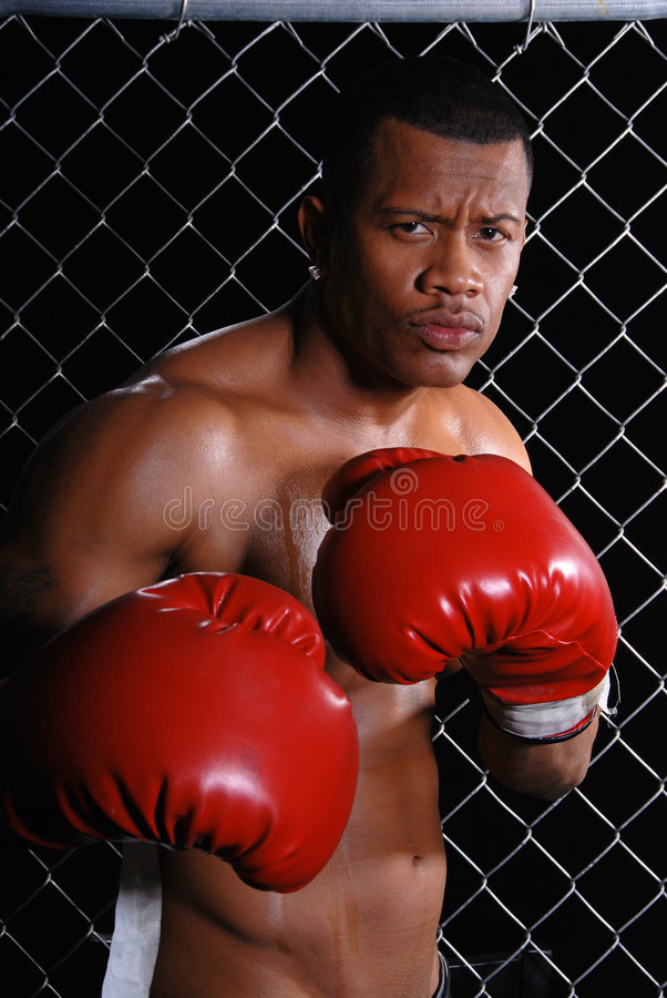 Angry Boxer. Royalty Free Stock Photo