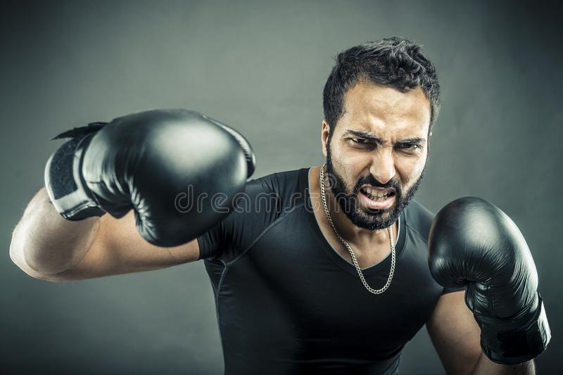 The Angry Boxer royalty free stock image
