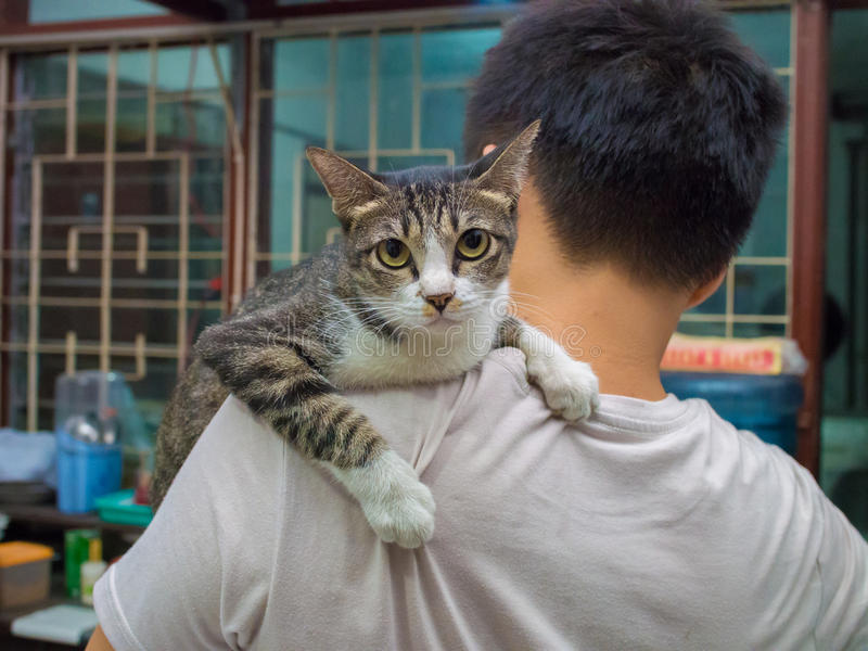 Angry Cat Carried by Man.  royalty free stock photo
