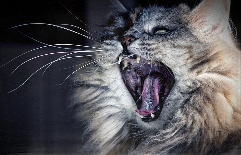 An angry cat? stock image