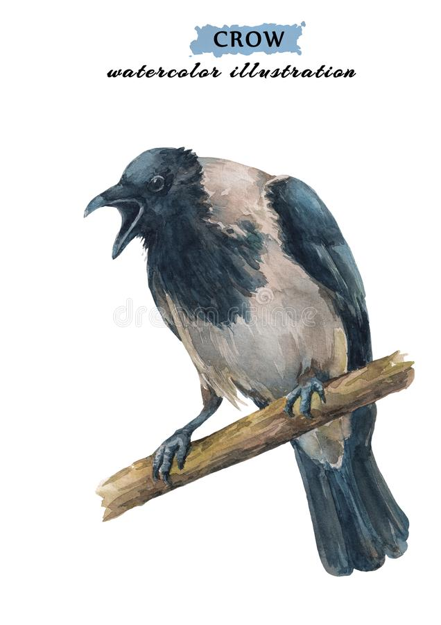 Angry, crying crow sitting on the branch. stock illustration