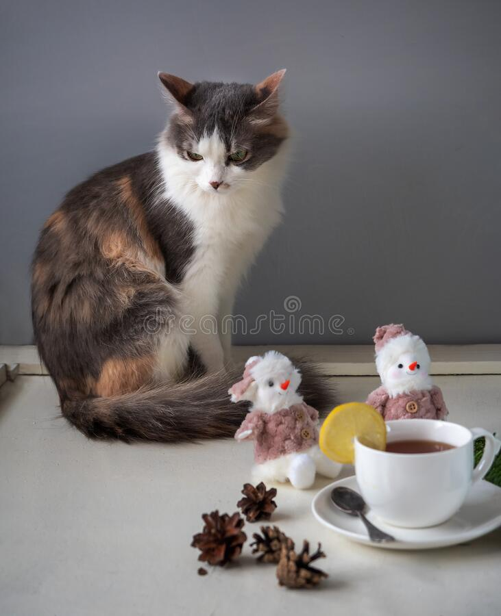 An angry fluffy cat is sitting on the table. On the front Board, tea in a white Cup, a slice of lemon, and snowman figures stock photos