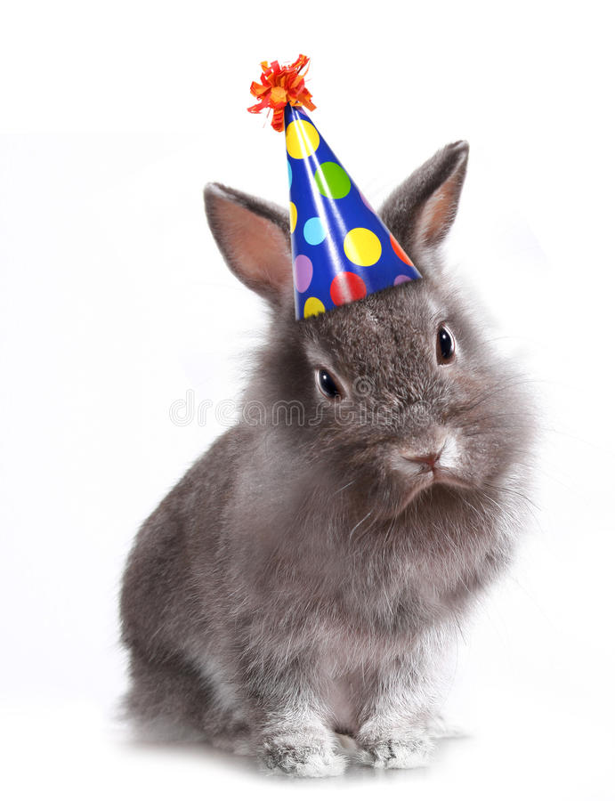 Angry Furry Grey Rabbit With a Birthday Hat On. Furry Grey Rabbit With a Birthday Hat On stock photography