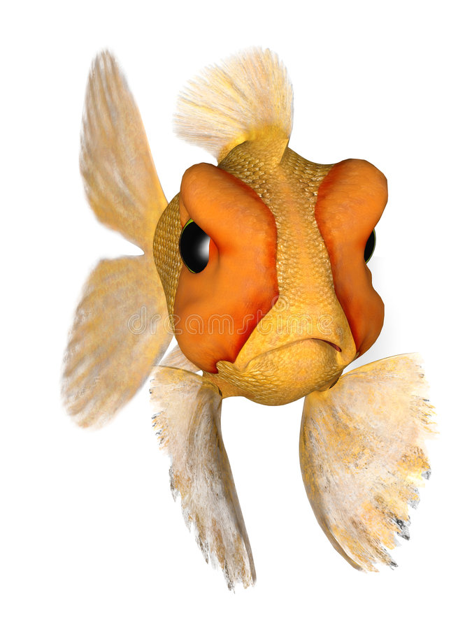 Download Angry Goldfish Royalty Free Stock Photos - Image: 6693868