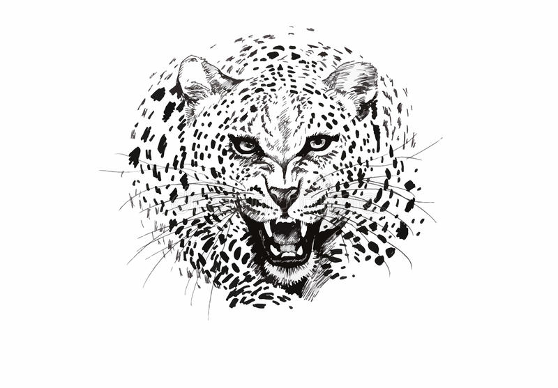 Angry leopard muzzle, black and white sketch royalty free illustration