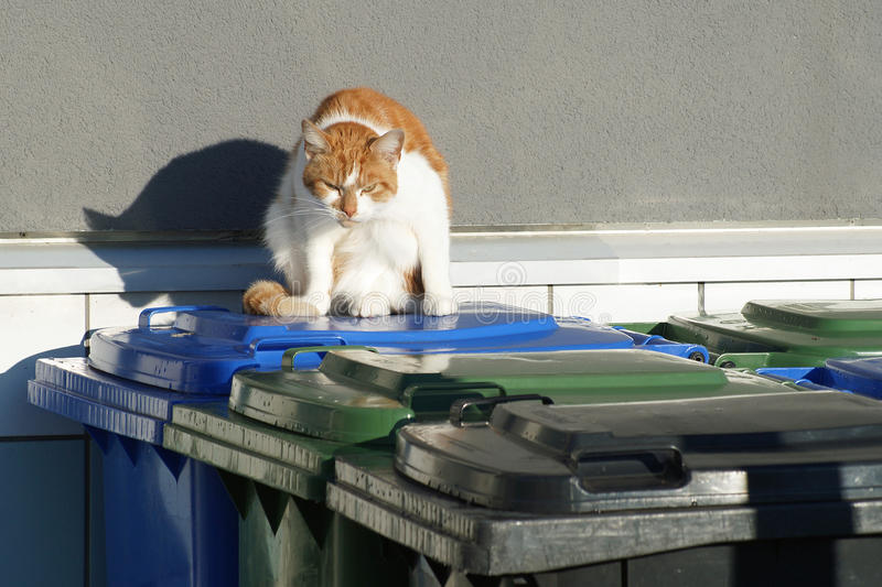Angry looking red-white cat on garbage bins. Red and white coloured housecat looks very angry to the photographer, while sitting on coloured waste bins stock photography