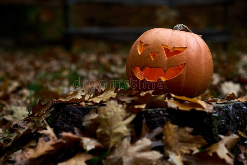 Angry orange pumpkin with scary smile among leaves at forest. Angry orange pumpkin with scary big eyes and smile. Hand made decoration prepared for Halloween royalty free stock photos
