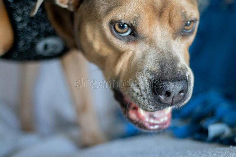 456 Dog Snarling Photos - Free & Royalty-Free Stock Photos from Dreamstime